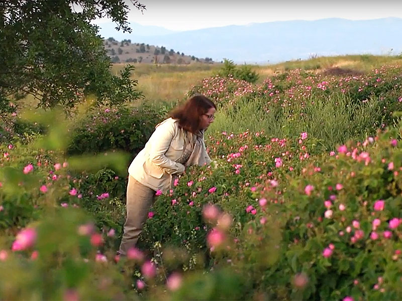 perfumer Domitille Bertier visited Isparta Turkey